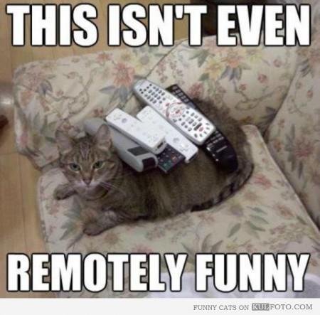Katt med kontroll